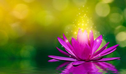 Wall Mural - Purple lotus flowers emit light floating in the water, natural green bokeh background