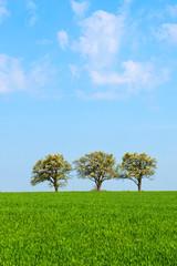 Frühling, Landschaft, blühende Obstbäume