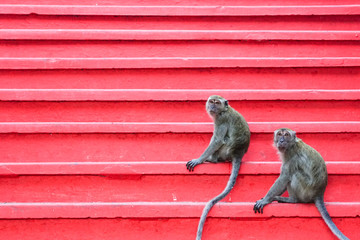 Monkeys on red staircase