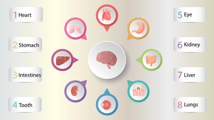 Human organs infografic vector design. Vital internal organs of the human body colored banner