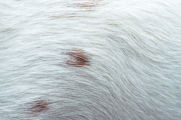 wool dog background, white with brown spots, texture, pattern