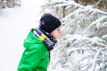 Boy blowing snow on spruce branches