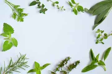 Fresh spicy and medicinal herbs on white background. Border from various herb - rosemary, oregano, sage, marjoram, basil, thyme, mint. Food frame for recipe