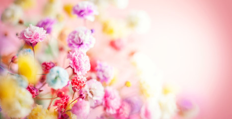 Spring or summer floral background. Blooming colorful small flowers.
