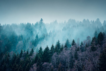 Beautiful winter mountain nature landscape with snow. Mountain forest with fog and mist with snow flakes and dark moody background. Harz Mountains National Park in Germany