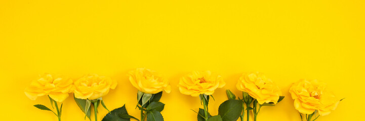 Yellow flowers on a yellow background. Spring, Easter, sunny mood.