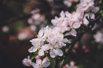 Beautiful blooming flower in garden, summer background.