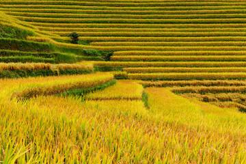 Close-up view of the rice paddies, Sapa, Vietnam