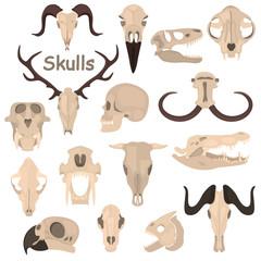 Human and animals skulls color vector icons set. flat design