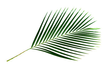Green palm leaf branch isolated on white background with clipping path.