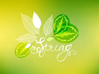 Spring green pattern with tropical abstract green leaves.
