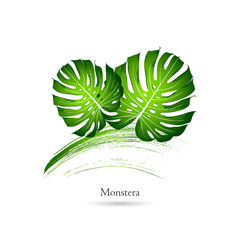 Green eco isolated leaf monstera on  white pattern. Logo. Vector element for design.