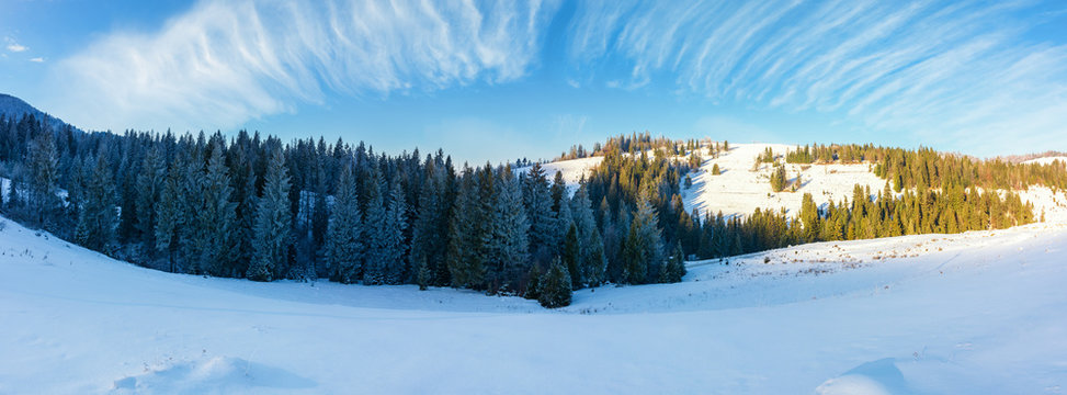 panorama of a beautiful winter landscape. spruce forest on a snow covered hills. part of trees in the shade. wonderful nature scenery in mountains