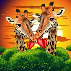 Poster Draw Giraffes in Love in Wild African Savanna Valentine s Day Vector Illustration