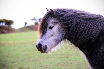 Wild Grey Horse