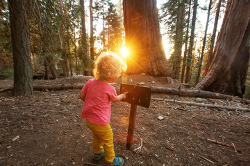 boy visit Sequoia national park in California, USA
