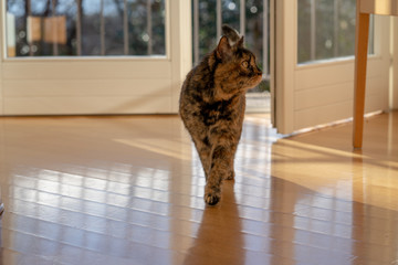 "Cat series ""Walking in the house"""