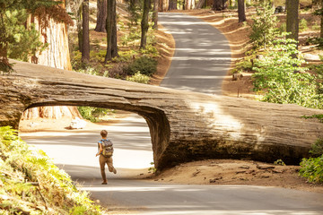 Hiker in Sequoia national park in California, USA Wall mural