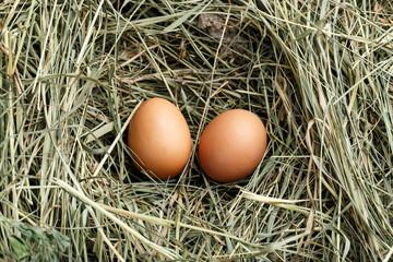 fresh chicken eggs in the straw