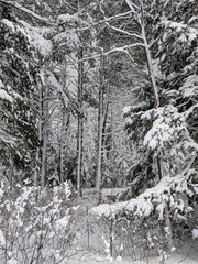 Wall Mural - Northwoods Michigan Winter Forest