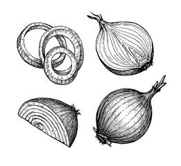 Fototapeta Ink sketch of onion. obraz