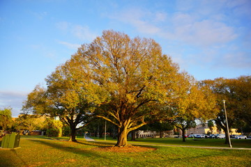 winter tree in Florida