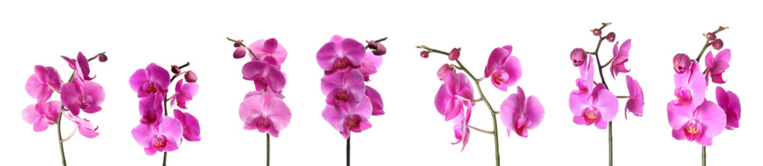 Tuinposter Orchidee Set of beautiful purple orchid phalaenopsis flowers on white background