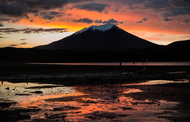 Photo Stands Magenta Bolivian Altiplano region with snow covered volcano, flamingos at the lagoon with beautiful sunset