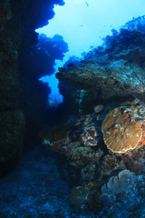 Wall Mural - Great Barrier Reef of Australia