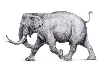 Indian elephant attack. Hand made pencil drawing.