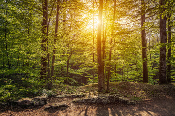 Sunrise in the forest, Plitvice Lakes National Park, Croatia