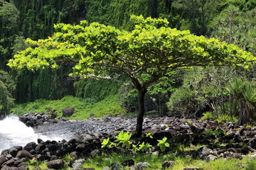 L'arbre de la plage