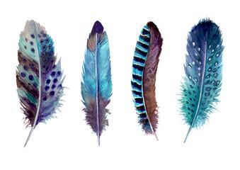 Hand drawn watercolour bird feathers vibrant boho style bright illustration. Fotoväggar
