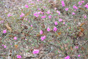pink flowers in the woods