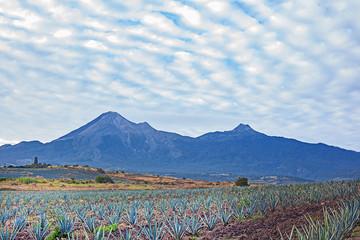 Tequilaplantage mit Vulkanen im Hintergrund