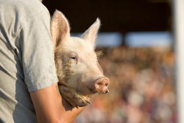 County Fair - Pig Wrestling