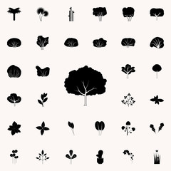 pear tree icon. Plants icons universal set for web and mobile