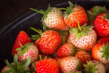 Fresh harvest strawberries background..Fresh organic strawberry