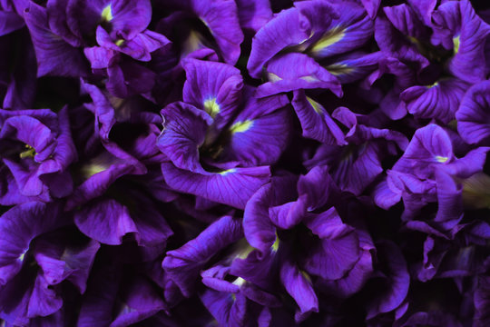 Purple flowers full of pictures