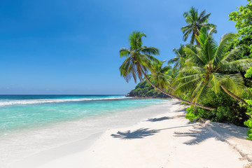 Fototapete - Exotic sandy beach with coco palms and turquoise sea in Jamaica island.  Summer vacation and travel concept.