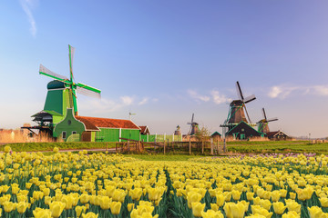 Amsterdam Netherlands, Dutch Windmill and traditional house at Zaanse Schans Village with tulip field Fototapete