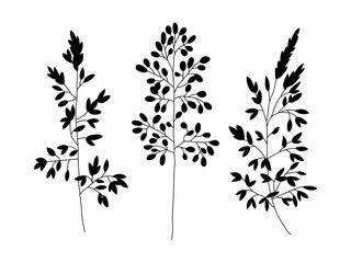 Wild and herbs plants set. Silhouette botanical hand drawn illustration. Spring flowers. Vector design. Can use for greeting cards, wedding invitations, patterns.