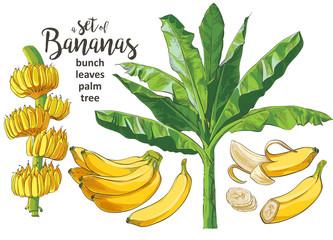 Vector Tropical bananas palm, textural seamless pattern.