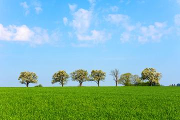 Frühling, Landschaft, Bäume