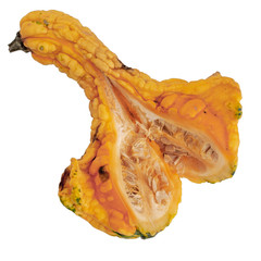 Collecting seeds from ornamental squash, cut open to show inside, isolated on white background.