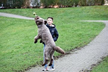 Junge spielt mit seinem Hund