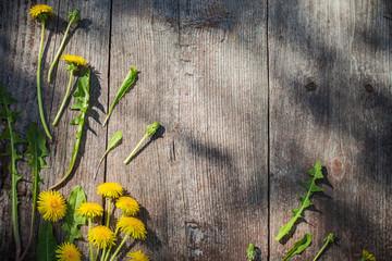 dandelions on old wooden background