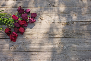 tulips on old wooden background