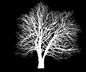 white bare dense tree isolated silhouette