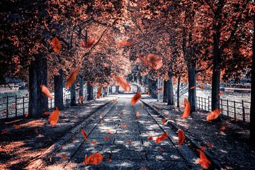 Fototapete - Leaves falling in the park in Paris